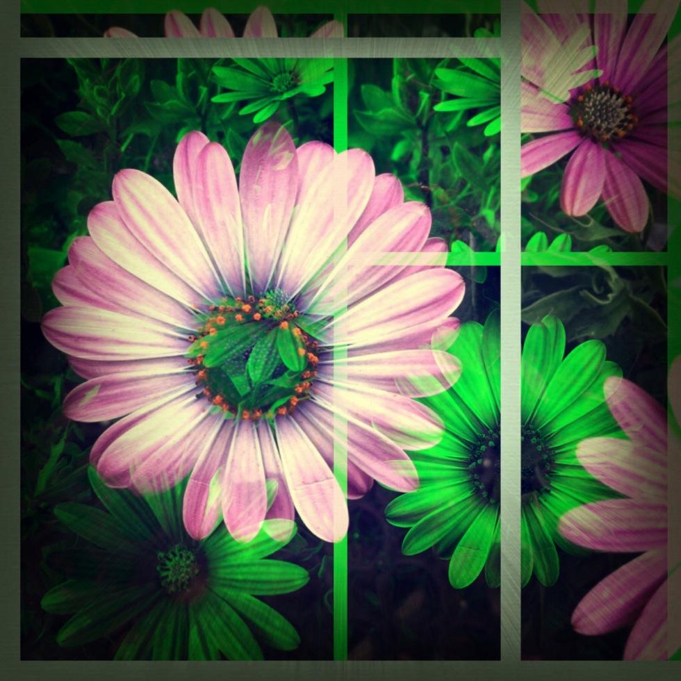 altered flower
